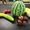 旬のEM野菜が豊富でうれしい。楽しみ。いただき物に感謝。