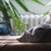 眠る投資、ハーバード大学が教える世界最高の睡眠法