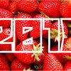 【2017年】「苺(いちご)生産量」ランキング