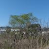 春風の手賀沼遊歩道