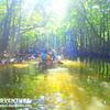 幻想的な森で木洩れ陽を感じよう〜おすすめ西表島観光アクティビティ