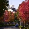 横浜市にある住宅街、十日市場ヒルタウン!街中も紅葉してきました。