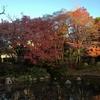 昨日の日本庭園