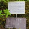 万葉歌碑を訪ねて(その1095)―奈良市春日野町 春日大社神苑萬葉植物園(55)―万葉集 巻三 四三四
