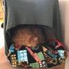 使い捨て  猫のベッド