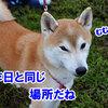 NDA羽生大会(ハロウィン大会)4(2日目)