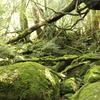 もののけ姫の森 白谷雲水峡 ~苔むす森を目指して~