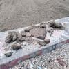 散歩:東公園砂場、FG(糞害)かなりあった