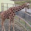 晩秋の釧路動物園へ