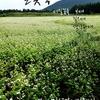 済州島(チェジュ島)10月の祭り情報 #花 #馬 #ヒラメ