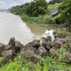 2021.7.4 相模川 増水時調査