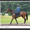 パカ競の一口馬主日誌 その3 2020年キャロットクラブ募集馬決定