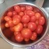 今年最後のミニトマト ずぼらで栽培しても苗4本で200個くらい取れました