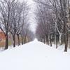 【初雪】と【新雪】の違いとは何?読めばスッキリ!