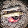 長良川で旨い鮎を喰う
