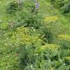 混植・花園農法のススメ