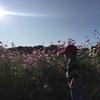 【秋の花】コスモス畑に行ってみた【季節を感じる】