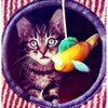 猫がおもちゃで遊ばない!って時のお助けアイテム5つ
