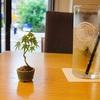 盆栽をカフェで撮る