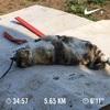 2018/03/28のトレーニング(ラン5.6km&エアウェイト)