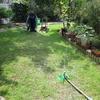 真夏の庭仕事