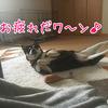 【祝】初出勤☆今夜は炊き込み飯と甘辛鶏唐( ^ω^ )