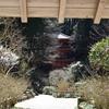 岩船寺/隅鬼棲む山寺 木もれ日と蕾と鳥のさえずりと