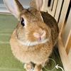 ウサギのちまき今日の1枚『興奮して粗相をする』