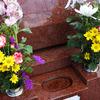 夫とは同じ墓に入りたくない女性急増!10万円の女性専用墓