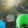 池でザリガニを釣る
