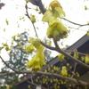 やはり春なんですよね