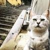 インスタ映えするオススメの街、尾道。広島旅行②