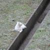 猫が原の大掃除