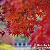 【カブ旅】高尾山の紅葉を見に行こうと思ったらカブは通行禁止だった【おかしい】