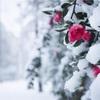 寒い時期の旅行