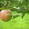 リンゴ園 秋田県大仙市 農業科学館