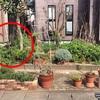庭の断捨離〜引き算で目指す美しい庭〜