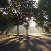 朝靄の公園