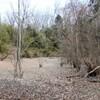 冬枯れのハンノキ池