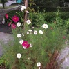 公園・お花のおすそ分け