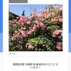 Googleローカルガイドの写真 1枚の閲覧回数が1,000回達成の連絡