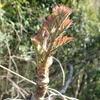 トゲのある植物たち その1