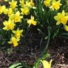 春が少しづつ