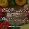 870食目「自然被害にあった農作物が10色のクレヨンに!」北海殿ワイナリーが発売!