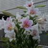 香りの良い花