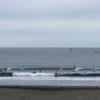 ロングで横に走れる波あり。情報 湘南鵠沼08/22