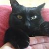 今日の黒猫モモ&白黒猫ナナの動画ー971