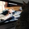 動画の猫が気になる風ちゃん。