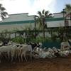 羊あふれる犠牲祭前のダカール