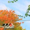 上野公園の紅葉(色付きはじめました)